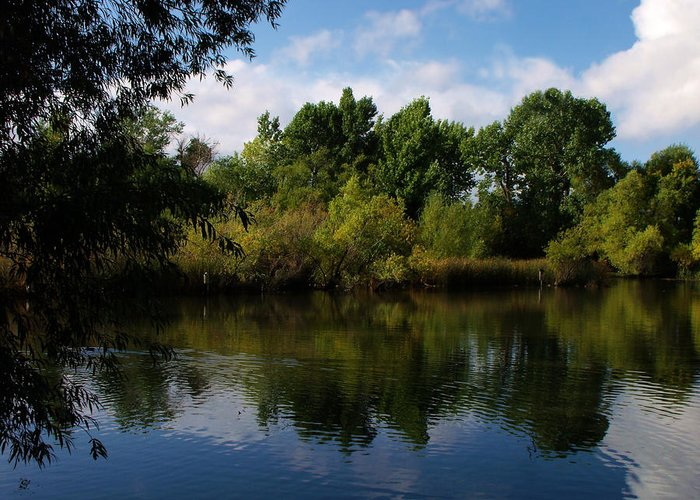 Waterscape Greeting Card featuring the photograph Beus Pond Reflections by Jan Tribe