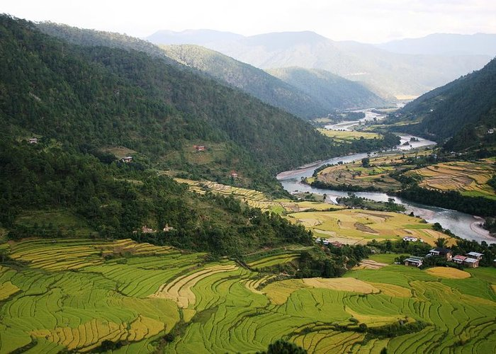 Scenery River Winding \rice Fields\ Lush Green View Bhutan \namgyal Choling\ Greeting Card featuring the photograph Bhutan Rice Fields by Linda Russell