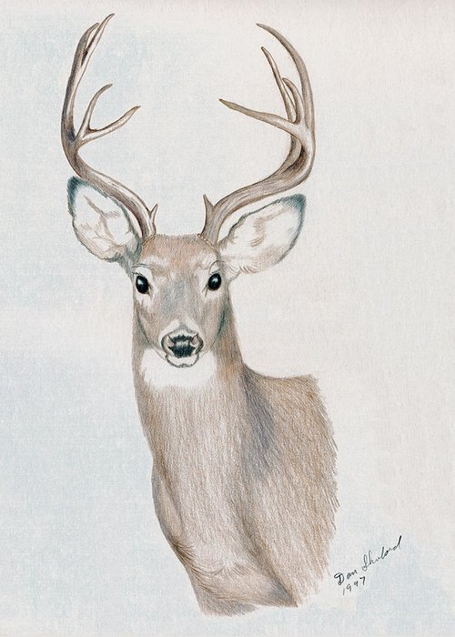 Wildlife Greeting Card featuring the drawing Big Buck by Daniel Shuford