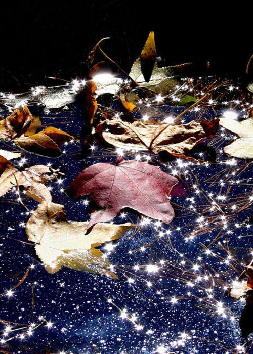 Fall Greeting Card featuring the photograph Big Leaf Theory by Don Whipple
