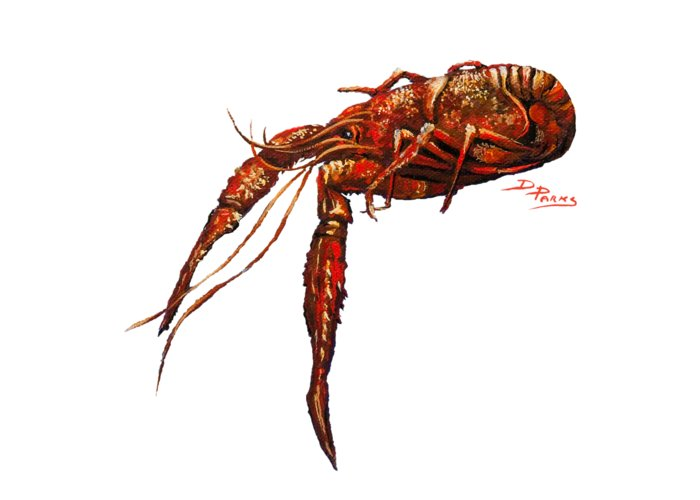 Crawfish Greeting Card featuring the painting Big Red by Dianne Parks