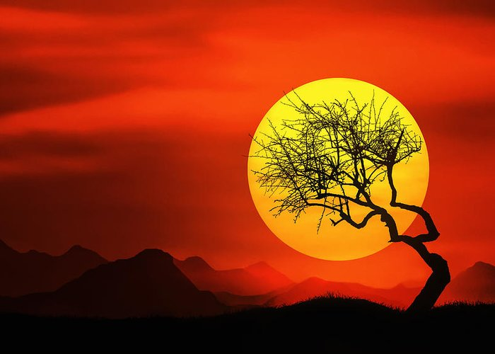 Sunlight Greeting Card featuring the photograph Big Sunset by Bess Hamiti