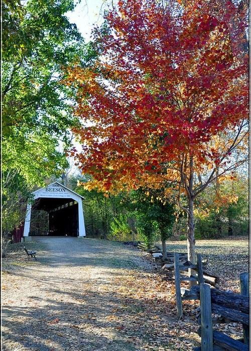 Autumn Greeting Card featuring the photograph Billie Creek by Brittany H