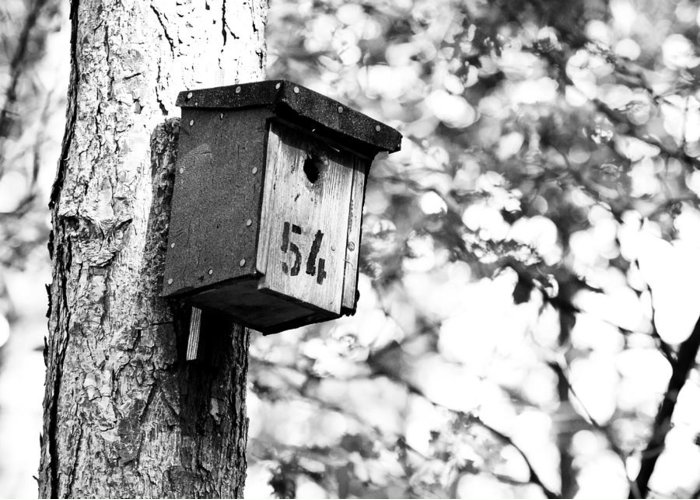 Bird House Greeting Card featuring the photograph Bird 54 Where Are You by Edward Myers