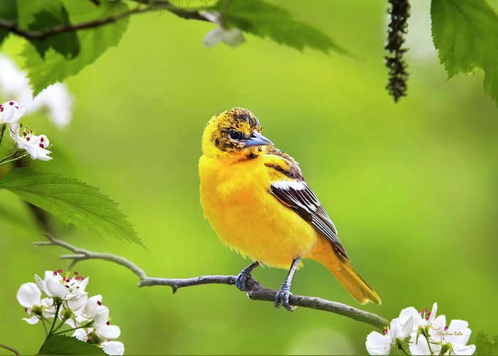 Bird Greeting Card featuring the photograph Bird And Blooms - Baltimore Oriole by Christina Rollo