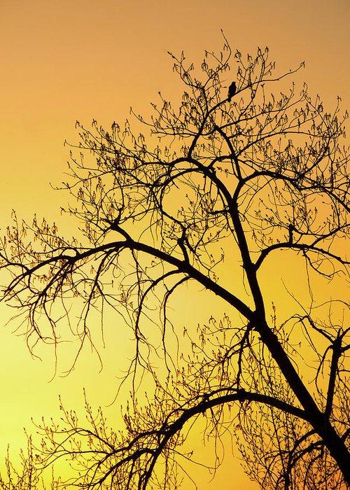 Sunset Photography. Bird In Tree. Bird Photography. Yellow Sunset. Fine Art Photography Greeting Cards. Fine Art Photography. Sunset Greeting Cards. Tree Photography. Fine Art Wall Photography. Wildlife Photography. Greeting Card featuring the photograph Bird At Sunset by James Steele