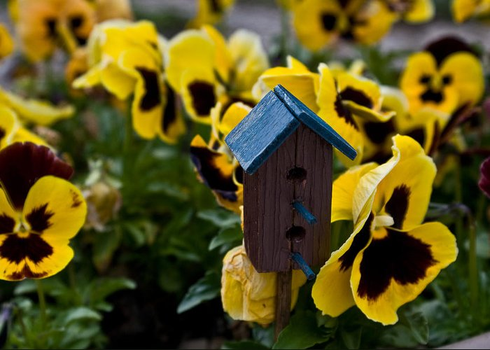 Bird Greeting Card featuring the photograph Bird House And Pansies by Douglas Barnett