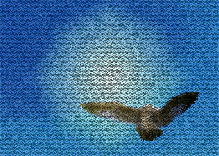 Freedom Greeting Card featuring the photograph Bird In The Sky by Robin Hernandez