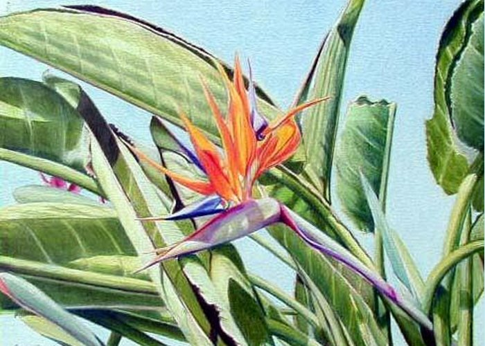Flowers Greeting Card featuring the mixed media Bird Of Paradise by Constance Drescher