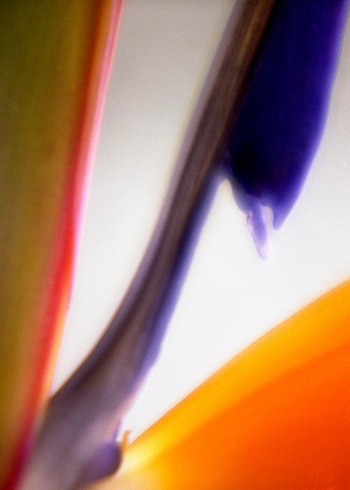 Macro Greeting Card featuring the photograph Bird Of Paradise by Lee Santa