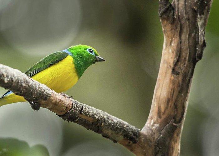 Photo Tours Peru Greeting Card featuring the photograph Bird Of Peru by Flavio Huamani Quejia