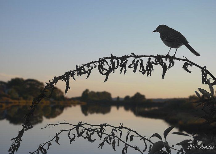 Pond Greeting Card featuring the photograph Bird Song At Last Light by Dave Gordon