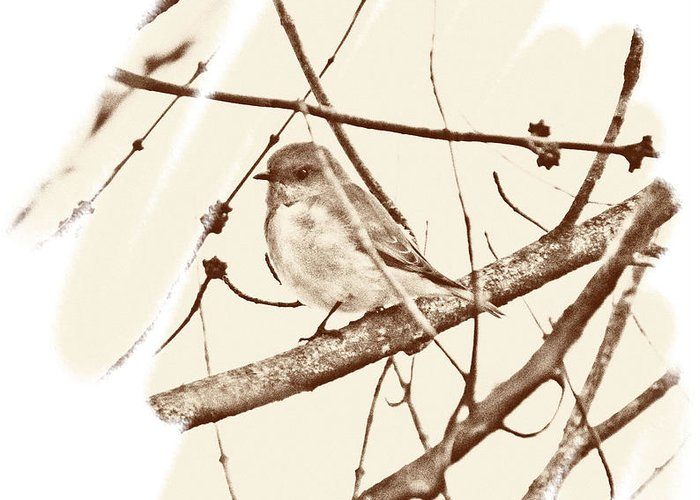 Bird Greeting Card featuring the photograph Birdie by Russ Mullen