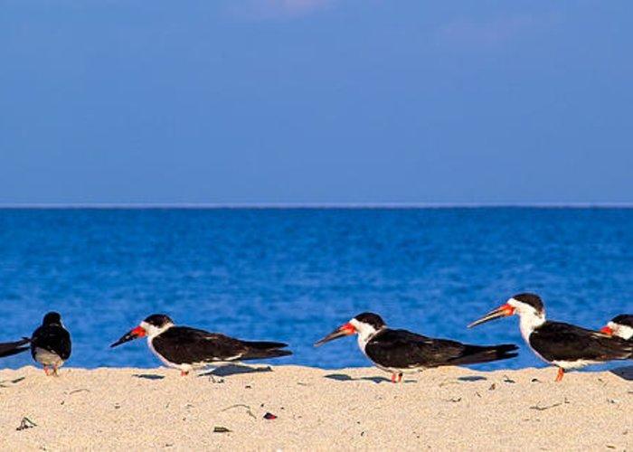 Miami Beach Greeting Card featuring the photograph Birdline by Gary Dean Mercer Clark