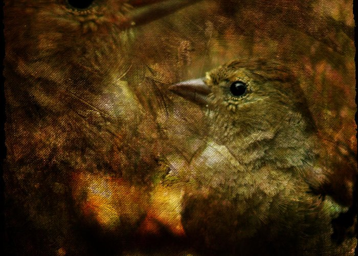 Sparrow Greeting Card featuring the photograph Birds by Angel Ciesniarska