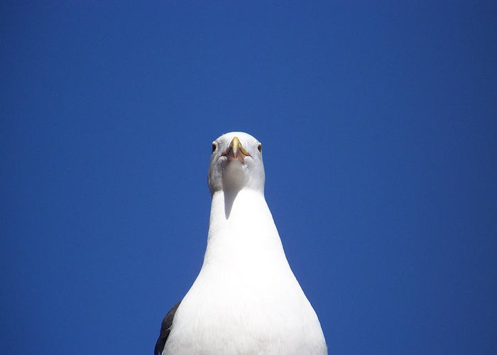 Seagulls Greeting Card featuring the photograph Birds Eye View by Maggie Cruser