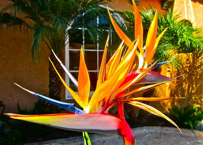 Photograph Of Bird Of Paradise Greeting Card featuring the photograph Birds In Paradise by Gwyn Newcombe