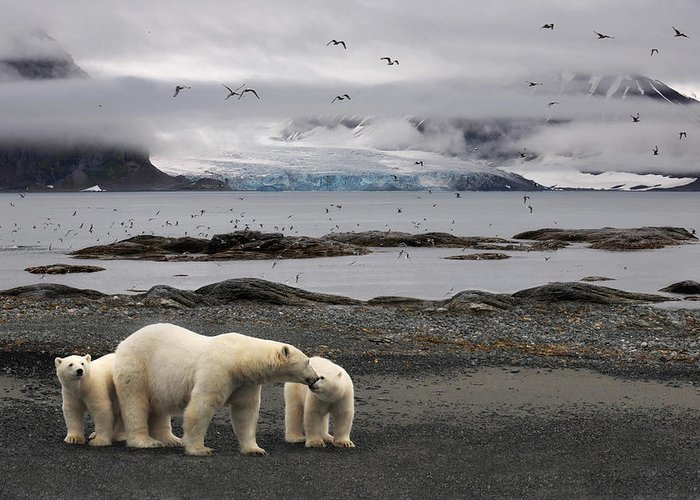 Svalbard Greeting Cards