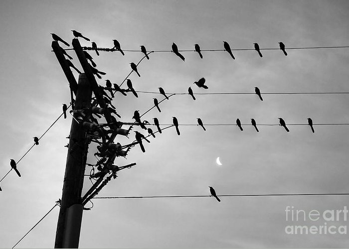 Greeting Card featuring the photograph Birds On A Wire by Lionel Martinez