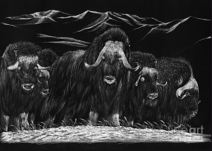 A Herd Of Bisons Gather On A Snowy Plane- Scratch Board Greeting Card featuring the painting Bisons by Mui-Joo Wee