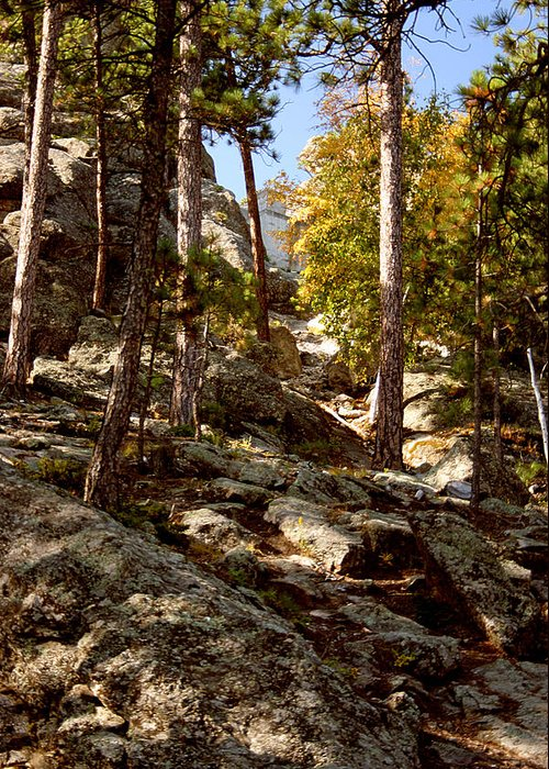 Mount Rushmore Greeting Card featuring the photograph Blach Hills Terrain by Mike Oistad