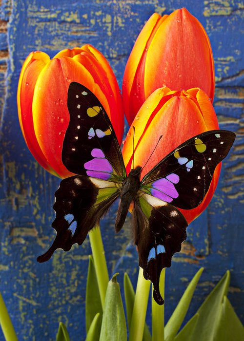 Butterfly Greeting Card featuring the photograph Black And Pink Butterfly by Garry Gay