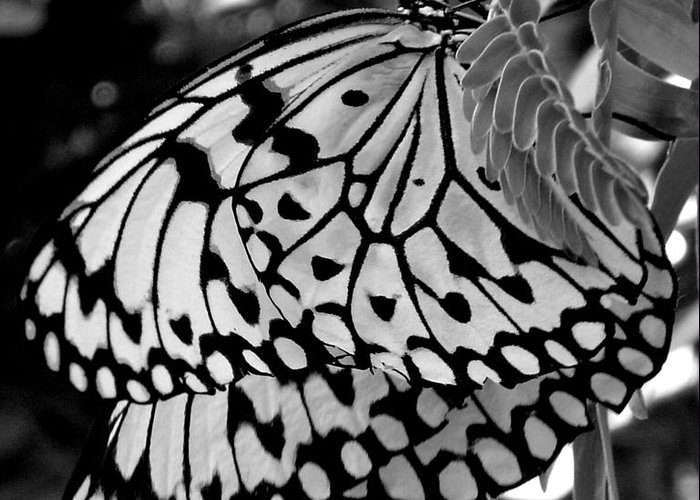 Photograph Greeting Card featuring the photograph Black and white butterfly by Shelley Jones