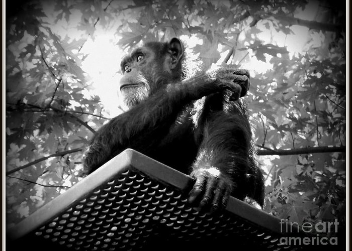 Black And White Greeting Card featuring the photograph Black And White Chimpanzee by Emily Kelley