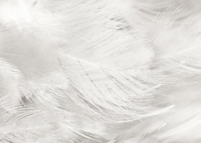 black and white feather texture background greeting card