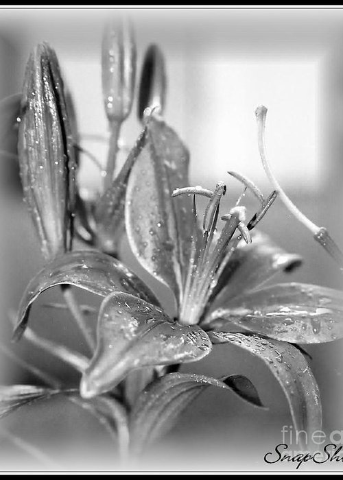 Black And White Greeting Card featuring the photograph black and White Lily by Emily Kelley