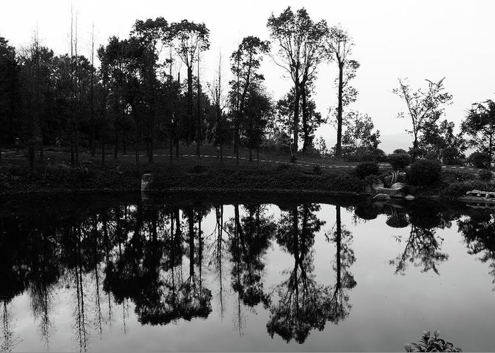 Trees Greeting Card featuring the photograph Black And White Reflected by Lauren Bucke