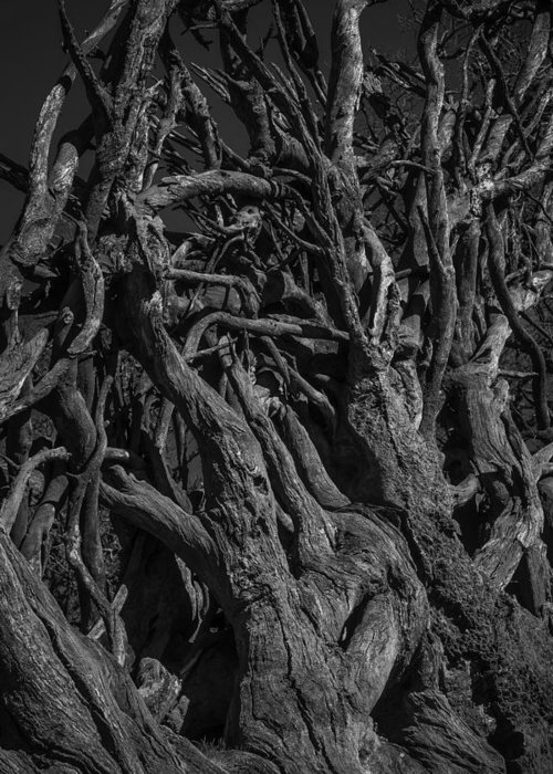 Roots And Branches Greeting Cards