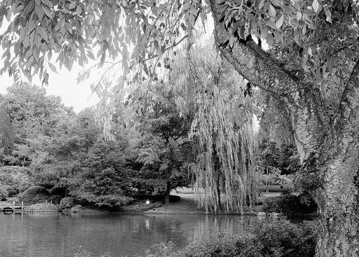 Lake Greeting Card featuring the photograph Black And White Tranquility by Rodger Mansfield