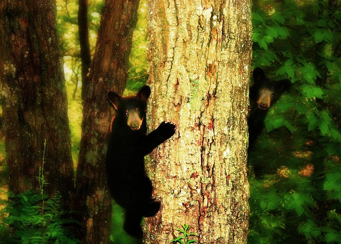Black Bear Cubs Greeting Card featuring the photograph Black Bear Cubs by Gray Artus