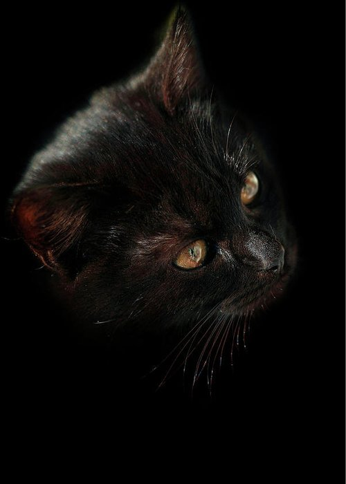 Cat Greeting Card featuring the photograph Black Cat by Olena Ivanova