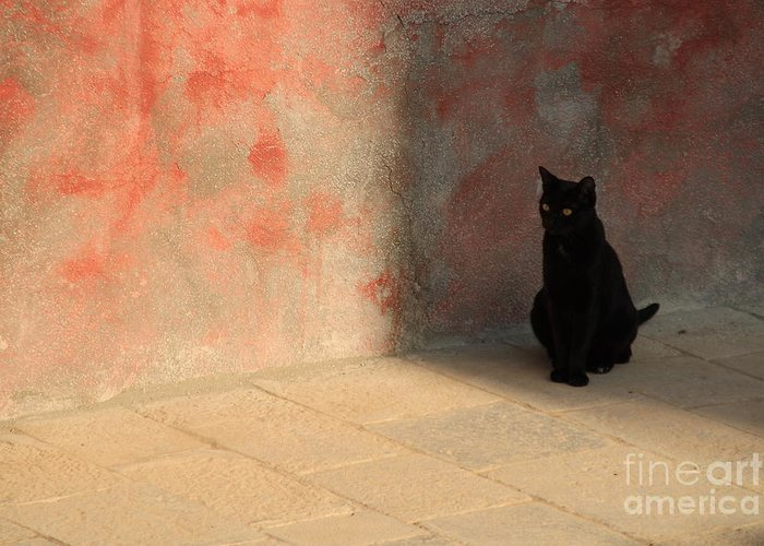 Cats Greeting Card featuring the photograph Black Cat On Burano by Michael Henderson