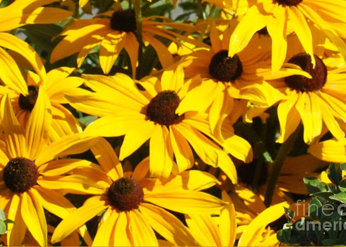 Flowers Greeting Card featuring the photograph Black-eyed Susan by Pam Schmitt
