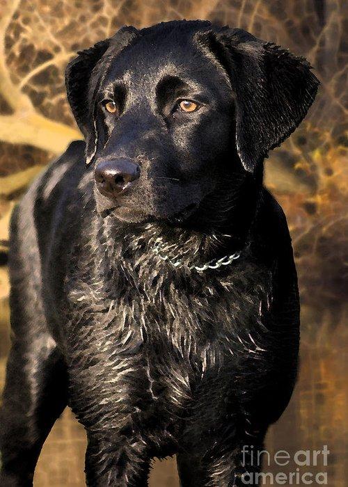 Labrador Retriever Greeting Card featuring the photograph Black Labrador Retriever Dog by Cathy Beharriell