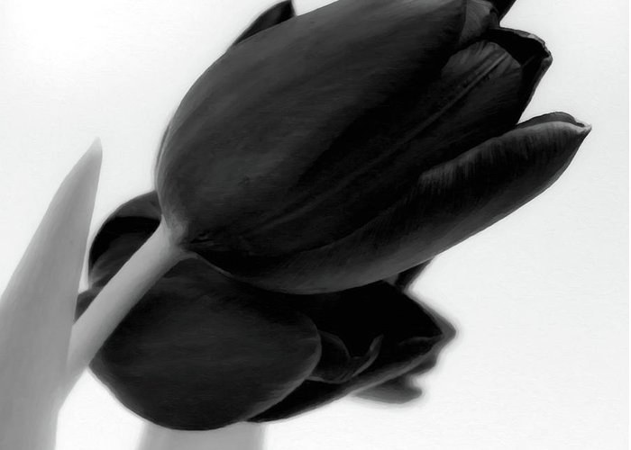 Tulips Greeting Card featuring the photograph Black Tulips by Wim Lanclus