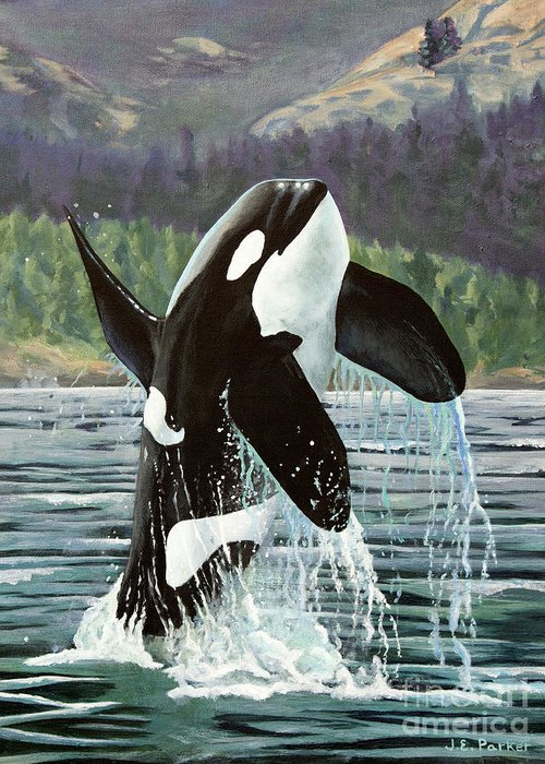 Blackfish Greeting Cards