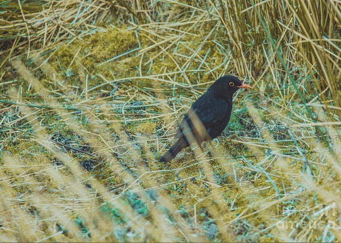 Greeting Card featuring the photograph Blackbird In The Undergrowth by Marc Daly
