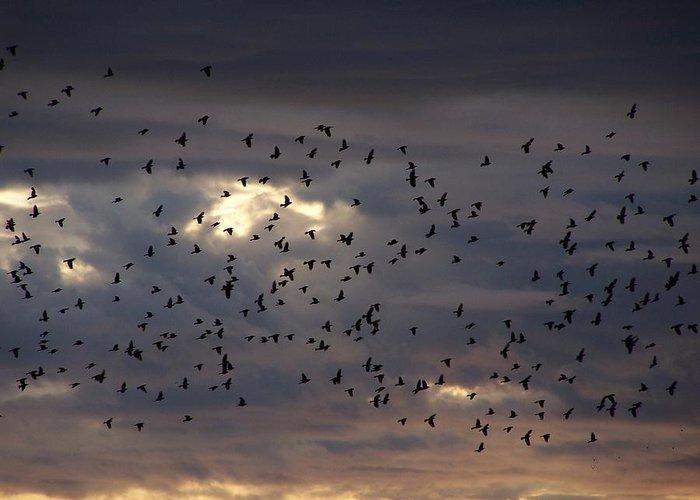 Birds Greeting Card featuring the photograph Blackbird Sunset by Gene Ritchhart