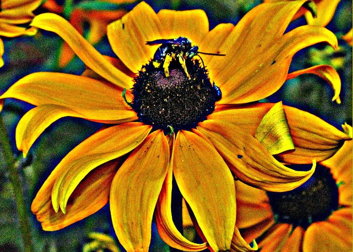 Flower Greeting Card featuring the photograph Blackeyed Susan With Bee by Richard Singleton
