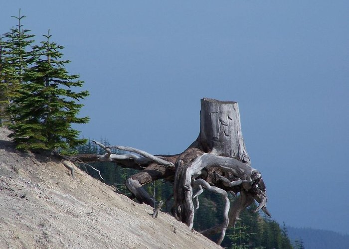 Landscape Greeting Card featuring the photograph Blasted Stump by Gene Ritchhart
