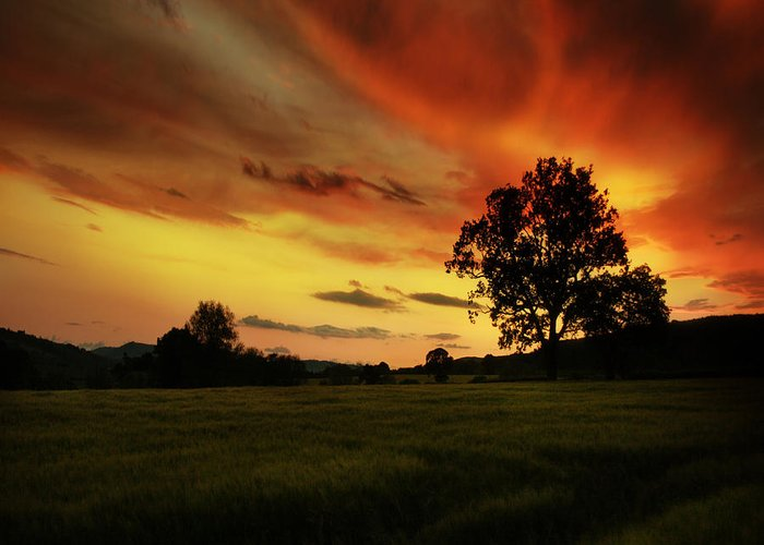 Sunset Greeting Card featuring the photograph Blazing Skies by Angel Tarantella