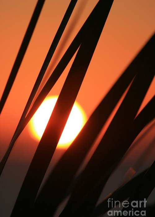 Sun Greeting Card featuring the photograph Blazing Sunset And Grasses by Nadine Rippelmeyer