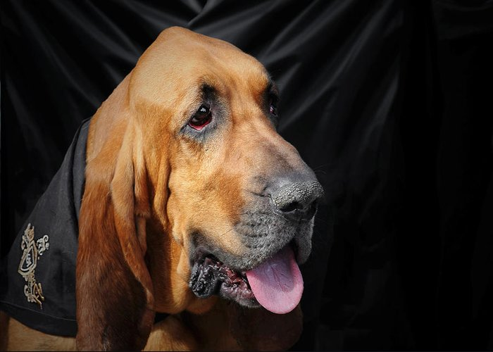Bloodhounds Greeting Card featuring the photograph Bloodhound - Governed By A World Of Scents by Christine Till