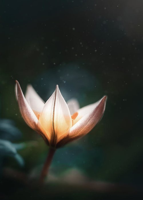 Flower Greeting Card featuring the photograph Blossoming Light by Scott Norris