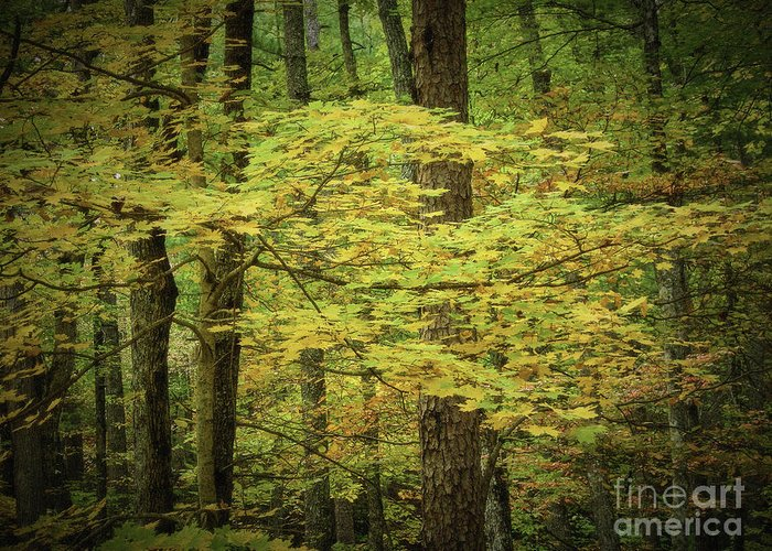 Smoky Mtns Greeting Card featuring the photograph Blowing In The Wind by Stanton Tubb