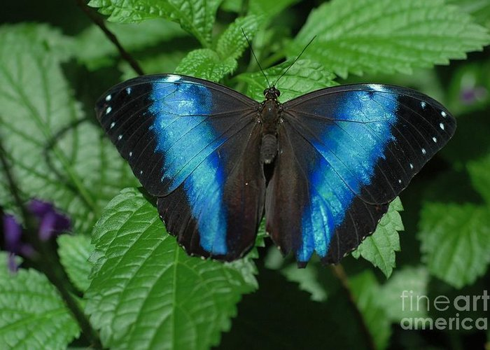 Blue Greeting Card featuring the photograph Blue And Black by Kathleen Struckle